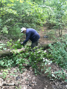 """Kimball """"Kim"""" Simpson of Westborough, a volunteer of the Sudbury Valley Trustees, uses a chainsaw to remove a fallen tree blocking a trail at Walkup and Robinson Memorial Reservation."""