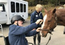 Grooming a horse is one of the components of an equine therapy program at Windrush Farm that engages people living with dementia.