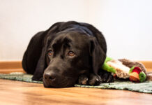 Dog Photo by Andreas-CC-BY-NC-ND-2.0.jpg